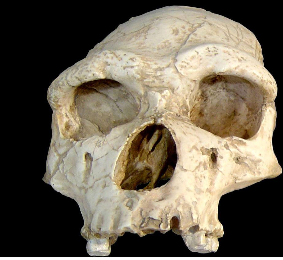 Ad:  neander10.jpg Gösterim: 7 Boyut:  92.2 KB