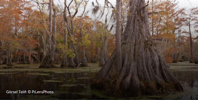 Ad:  Screenshot_2019-12-14 Kuzey Amerika'daki Bilinen Eski Ağaç Kayıtlara Geçti ».png Gösterim: 92 Boyut:  557.8 KB