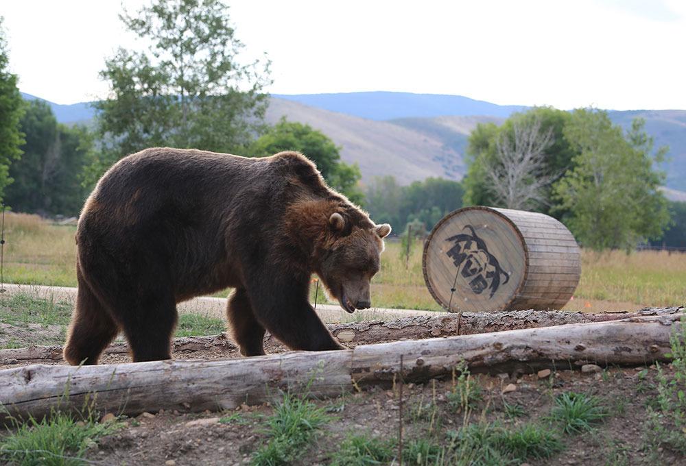Ad:  insan ayıya karşı.jpg Gösterim: 46 Boyut:  201.9 KB