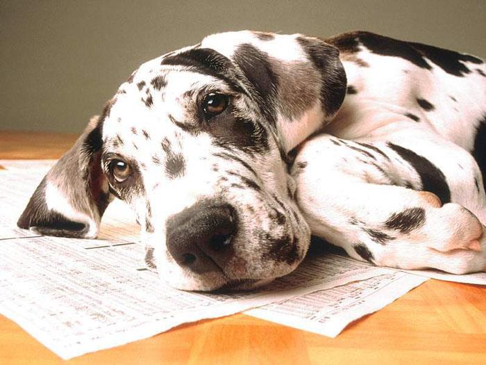 Ad:  dog_1.jpg Gösterim: 1579 Boyut:  103.3 KB