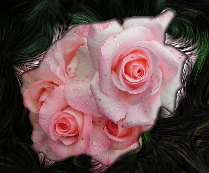 Ad:  posy_of_roses.jpg Gösterim: 345 Boyut:  68.6 KB