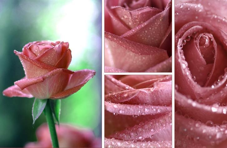 Ad:  Kiss_Of_A_Rose_by_ninazdesign.jpg Gösterim: 245 Boyut:  45.4 KB