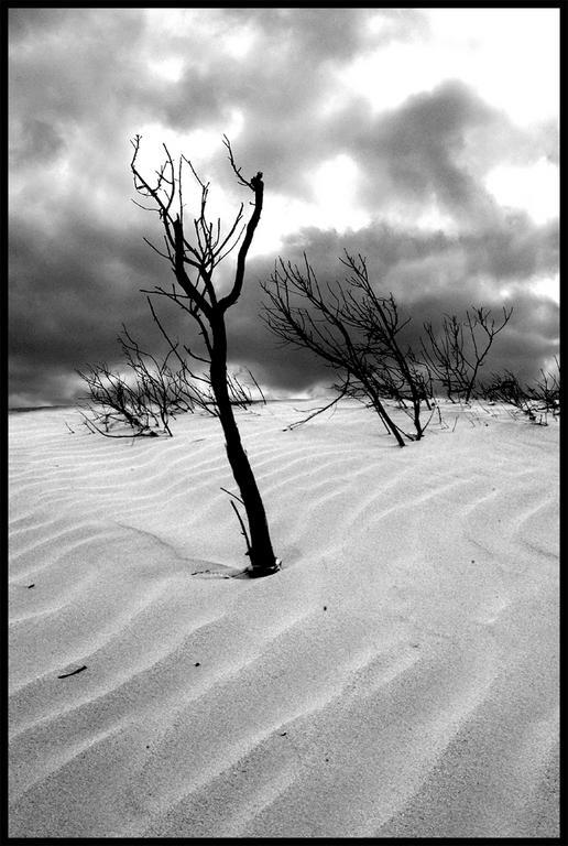 Ad:  sand_dunes_black_and_white.jpg Gösterim: 329 Boyut:  66.2 KB