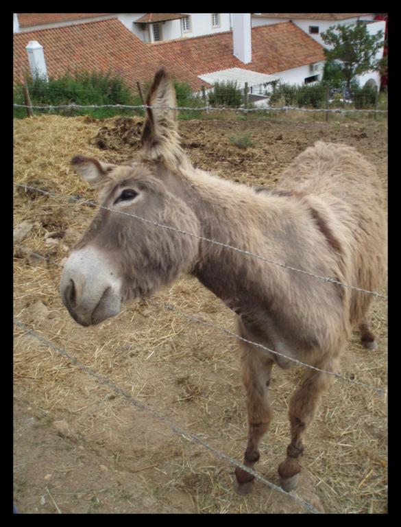 Ad:  Donkey_by_Catarino.jpg Gösterim: 1096 Boyut:  93.9 KB