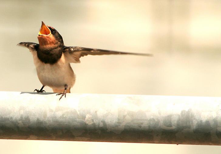 Ad:  The_dancing_bird_by_ffmdotcom.jpg G�sterim: 78 Boyut:  32.2 KB